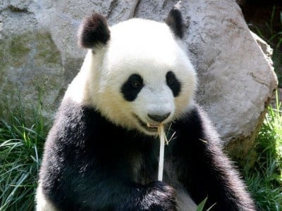 | Will Google Panda mean more SEO training?