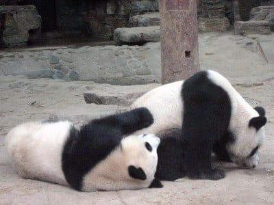 | A Post Panda SEO Checklist (Part 2)