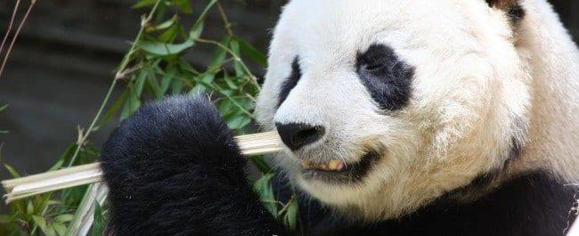   A Post Panda SEO Checklist (Part 1)